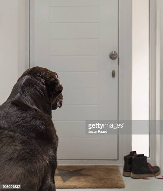 dog waiting by front door - waiting stock pictures, royalty-free photos & images