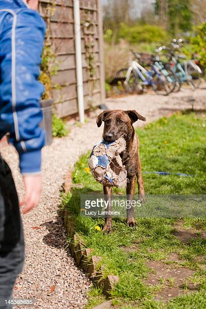 Dog waiting for boy to play with him