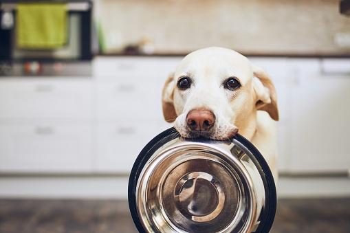 Dog waiting for feeding 1159049945
