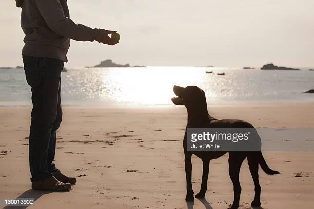 dog waiting for man to throw ball on beach - alleen één mid volwassen man stockfoto's en -beelden