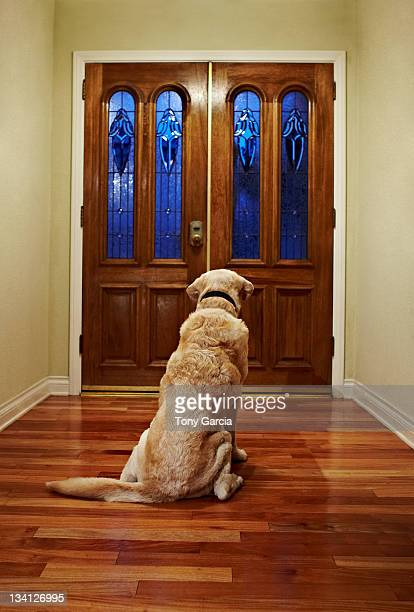 Dog waiting patiently at the front door