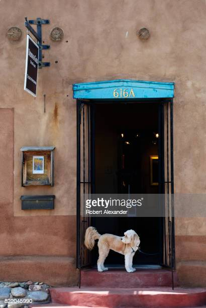 A dog waits at the door while its owner visits an art gallery in Santa Fe New Mexico