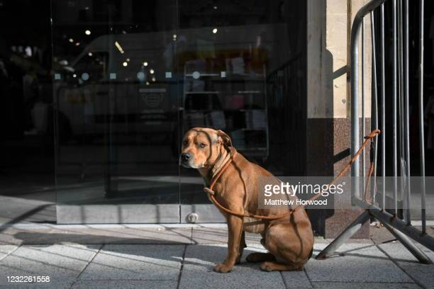Dog waits for its owner outside a JD sports store as non-essential retail reopens on April 12, 2021 in Cardiff, Wales. Lockdown restrictions have...