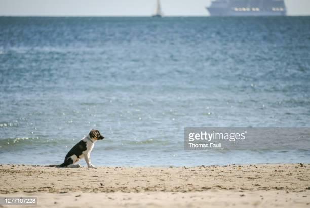 犬は遠くにクルーズ客船とビーチで待っています - プール湾 ストックフォトと画像