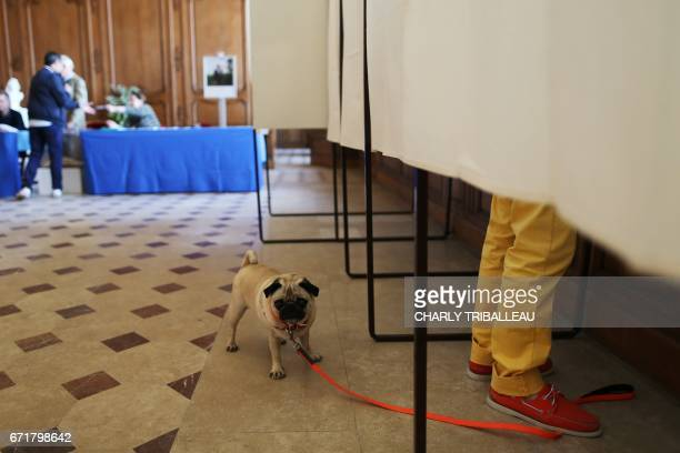 TOPSHOT A dog waits outside a polling booth as his owner prepares to cast his ballot in Caen northwestern France on April 23 2017 during the first...