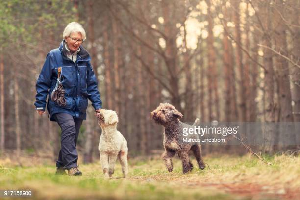 dog walk in the forest - walking stock pictures, royalty-free photos & images