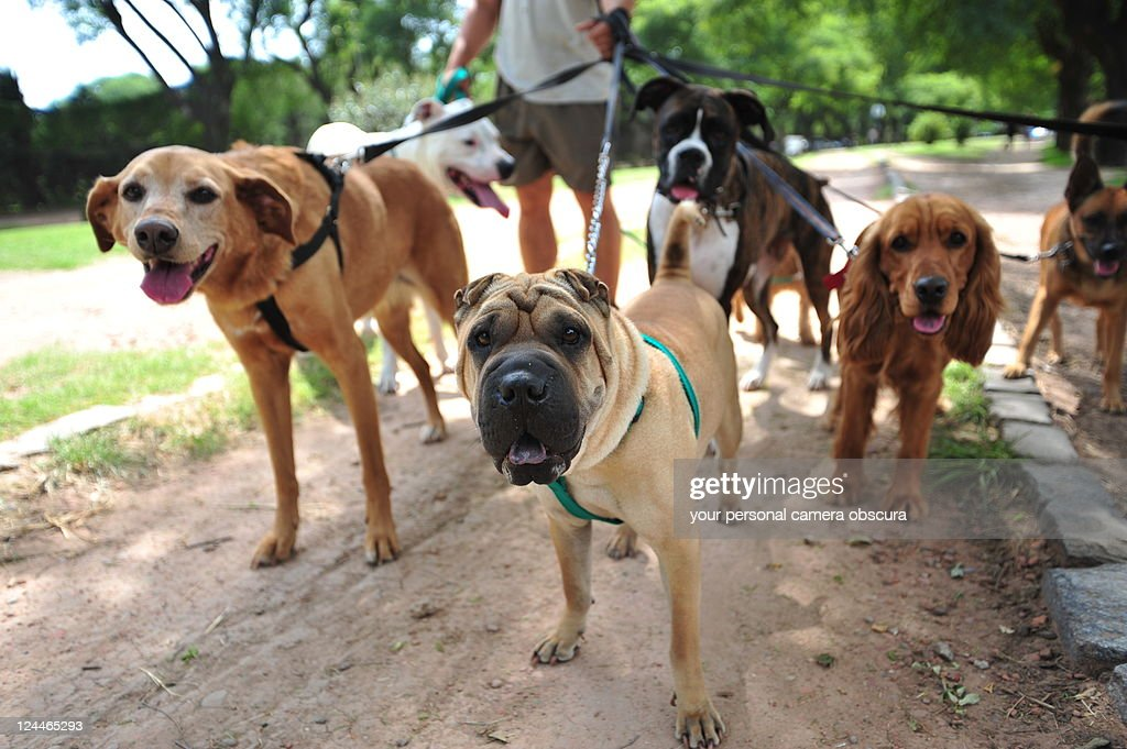 Dog walker in Buenos Aires : Stock Photo