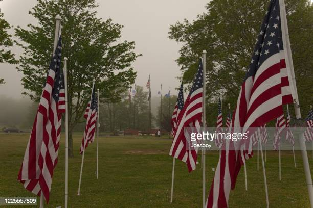 dog walker in memorial day veterans display - memorial day dog stock pictures, royalty-free photos & images