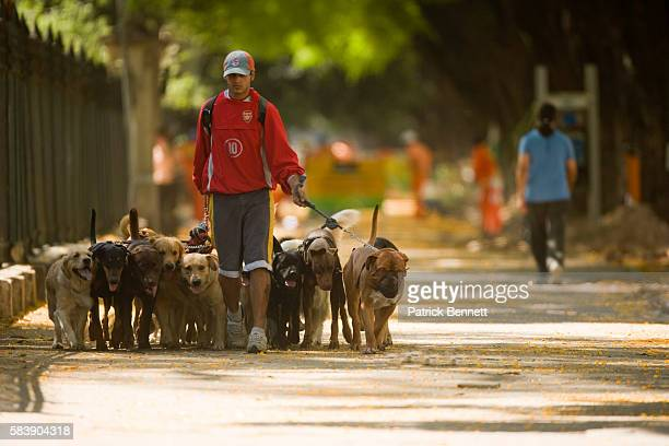 Dog walker in park in Buenos Aires