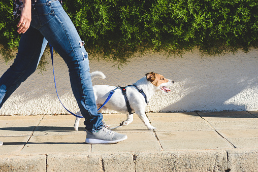 Dog walker strides with his pet on leash while walking at street pavement 1149531679