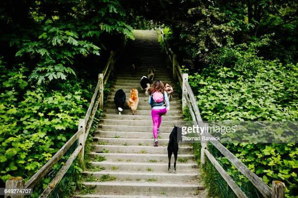 Dog walker walking group of dogs up steps at park