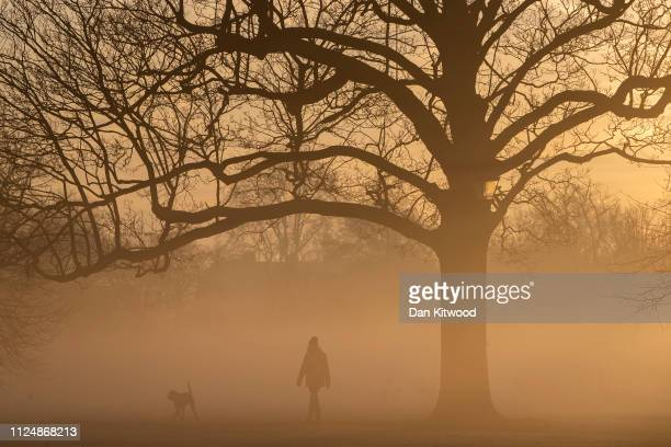 A dog walker walks through early morning fog in Clapham Common on February 14 2019 in London England