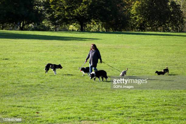 Dog walker with dogs in Finsbury Park, north London on a sunny and warm day.