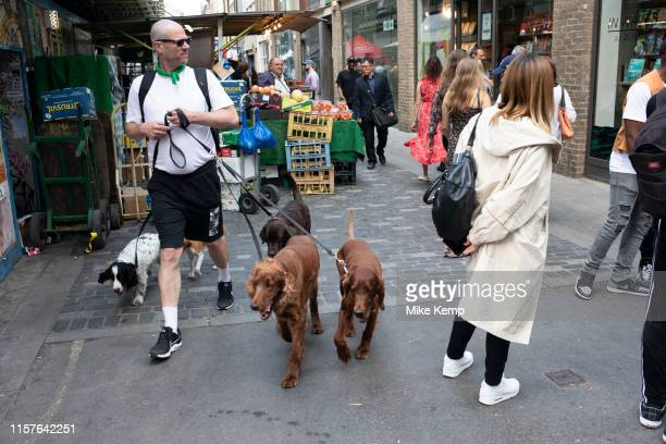 Dog walker with five dogs of many different breeds on Berwick Street in Soho London England United Kingdom
