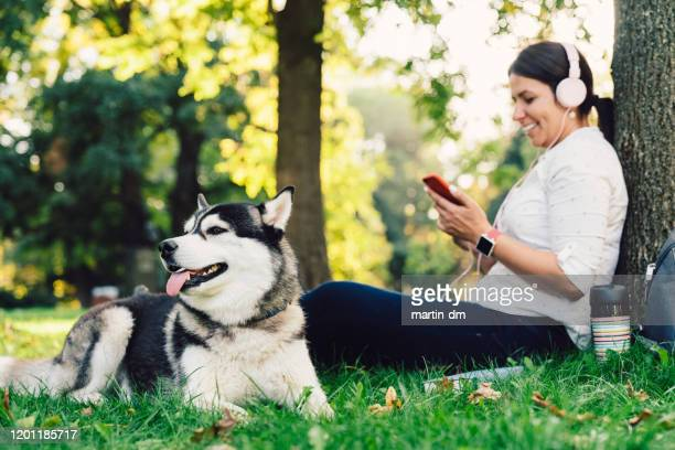 dog walker with siberian husky in the park - off leash dog park stock pictures, royalty-free photos & images