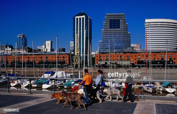 Dog walkers (paseadores de perros) in Puerto Madero, Buenos Aire's old harbour, with the city's towers behind the red brick warehouses.