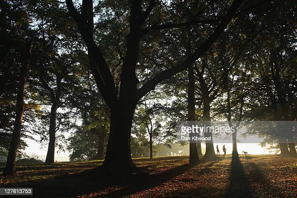 Dog walkers walk through the early morning mist on Hampstead Heath on September 30, 2011 in London, England. Much of the UK is enjoying a spell of...