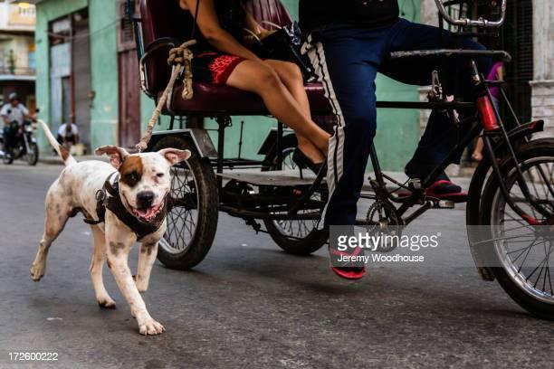 Dog walking alongside rickshaw on city street