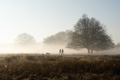 Dog walking in park on misty morning 1131773069