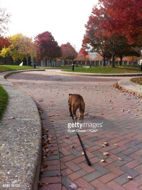 Dog walking in park