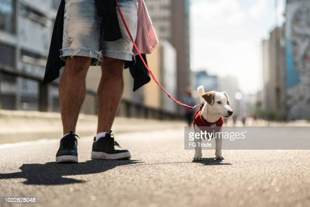 dog walking in the city - dog walker stock photos and pictures