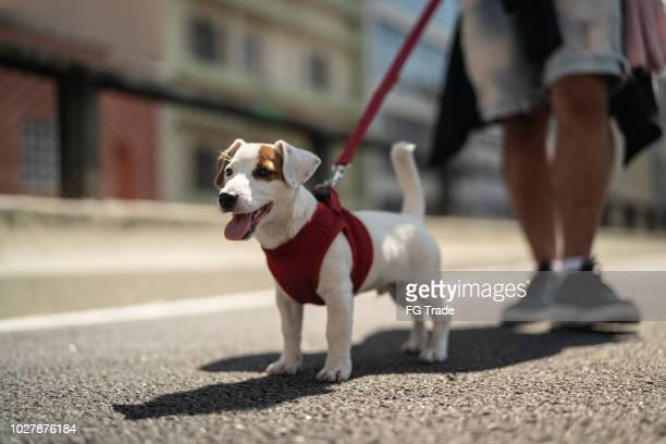 dog walking in the city - pet leash stock pictures, royalty-free photos & images