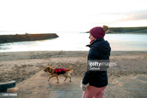 dog walking in the morning - part of a series stock pictures, royalty-free photos & images
