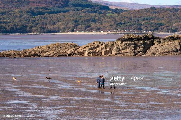Dog walking on a beach at low tide