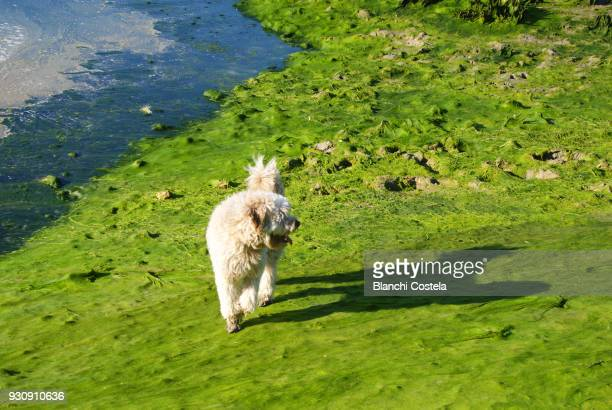 Dog walking on a beach covered with moss