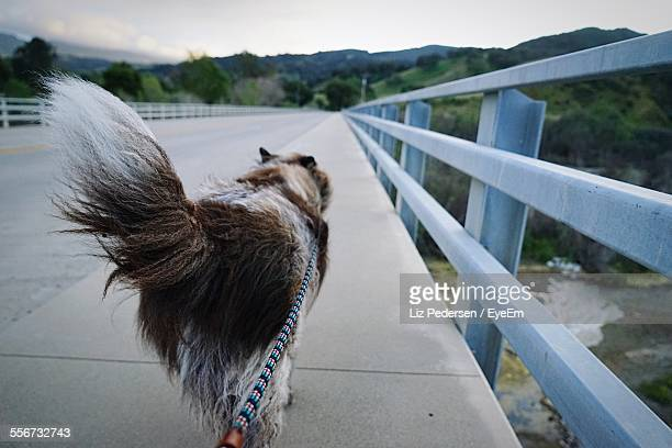Dog Walking On Sidewalk At Bridge