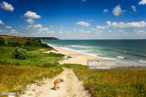 Dog walking towards a wild beach, Black sea