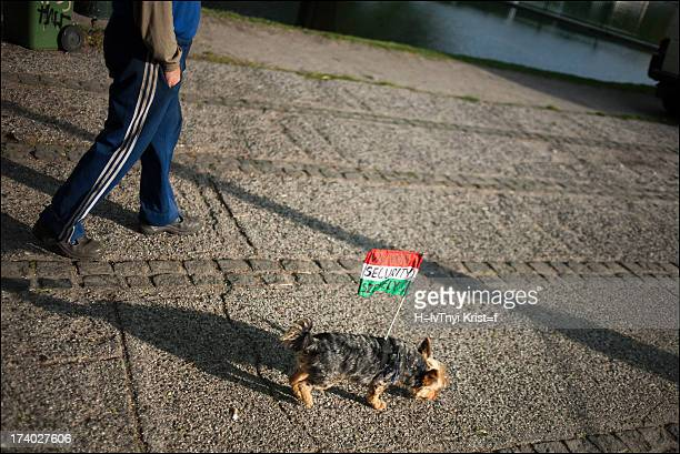 """Dog walking with a flag attached to his back. On the flag is """"Security"""" written."""