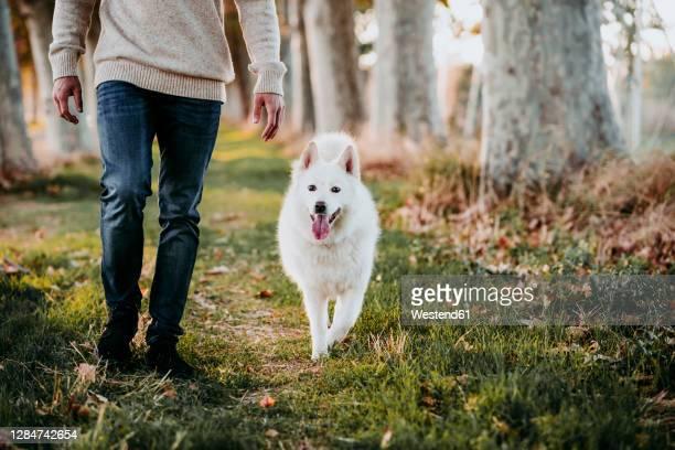 dog walking with man at forest - parte inferior imagens e fotografias de stock