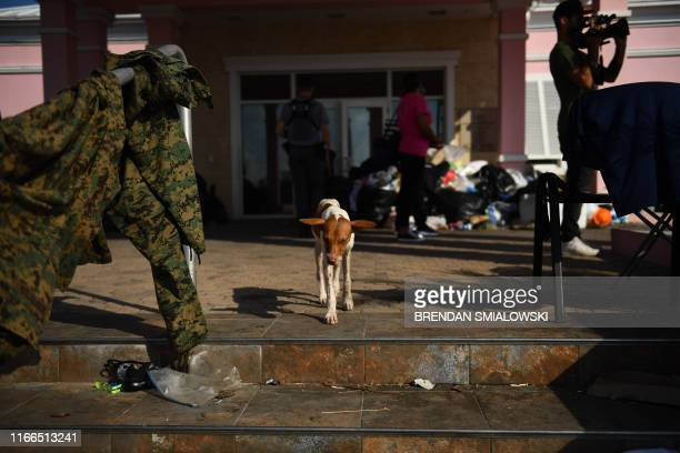 A dog walks by damage in Marsh Harbour Bahamas on September 7 in the aftermath of Hurricane Dorian Bahamians who lost everything in the devastating...