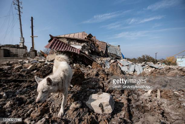 Dog walks in front of a destroyed house following recent shelling during the ongoing military conflict between Armenia and Azerbaijan over the...