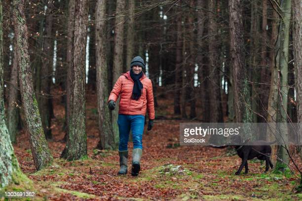 dog walks in the forest - dog walking stock pictures, royalty-free photos & images