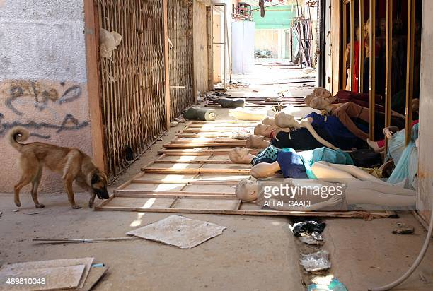 A dog walks near a damaged shop in the centre of the city of Tikrit on April 15 as Iraqi federal police set up checkpoints in the city to guard the...