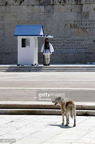 A dog walks near the Tomb of the Unknown Soldier outside the Greek parliament on Syntagma square as a Greek Evzone presidential guard stands on duty...