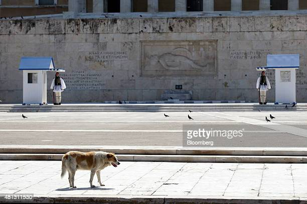 A dog walks near the Tomb of the Unknown Soldier outside the Greek parliament on Syntagma square as Greek Evzone presidential guards stand on duty in...