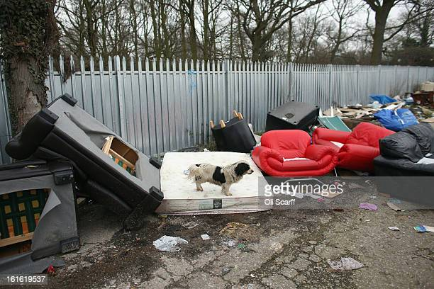 Dog walks on discarded furniture on the portion of the Dale Farm traveller's camp which was cleared of residents and structures by Basildon Council ,...