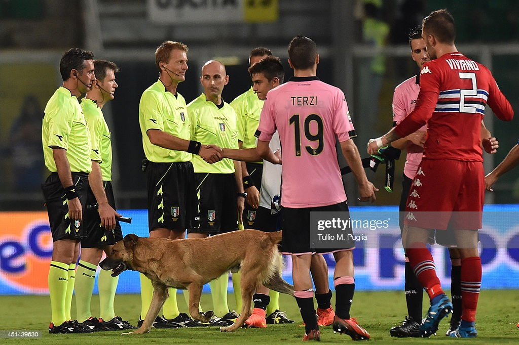 A dog walks on the pitch after the Serie A match between US Citta di Palermo and UC Sampdoria at Stadio Renzo Barbera on August 31, 2014 in Palermo, Italy.
