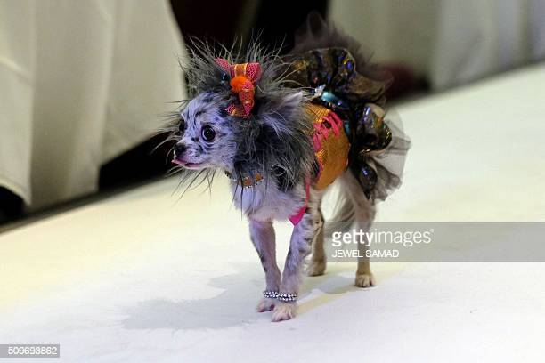 A dog walks on the ramp to present an outfit during the Pet Fashion Show in New York on February 11 2016 / AFP / Jewel Samad