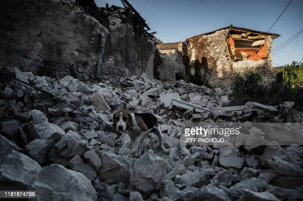 TOPSHOT A dog walks on the rubble of fallen masonry in the Rouviere quarter of Le Teil southeastern France on November 12 after an earthquake with a...