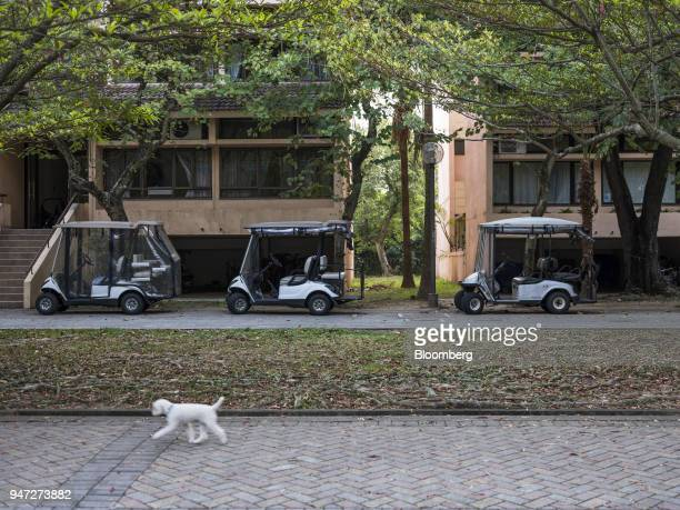 A dog walks past golf carts parked in front of lowrise buildings in Discovery Bay a residential project developed by Hong Kong Resort Co on Lantau...