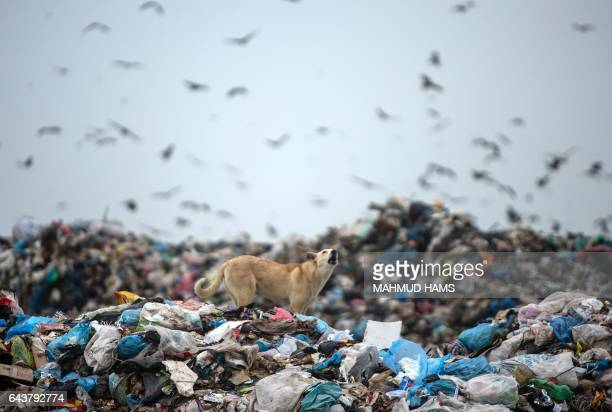 TOPSHOT A dog walks through a landfill on the Palestinian side of the border between Israel and eastern Gaza City on February 22 2017 / AFP / MAHMUD...