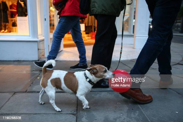 Dog walks with Christmas shoppers on Marylebone High Street on December 23, 2019 in London, England. There are just two days left until Christmas.