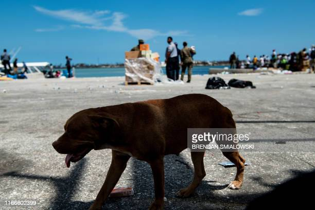 A dog wanders as people await evacuation by boat at the port afrer Hurricane Dorian September 7 in Marsh Harbor Great Abaco Bahamians who lost...