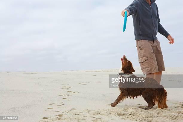 Dog Wanting Frisbee