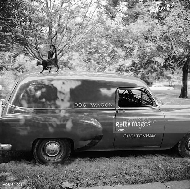 Dog Warden's Van