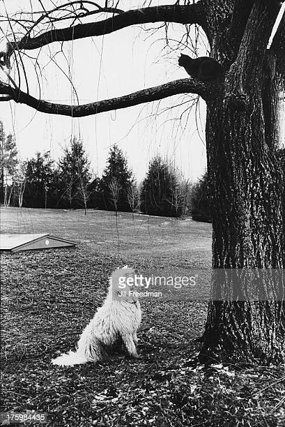 A dog watches a cat from the foot of a tree Connecticut 1973